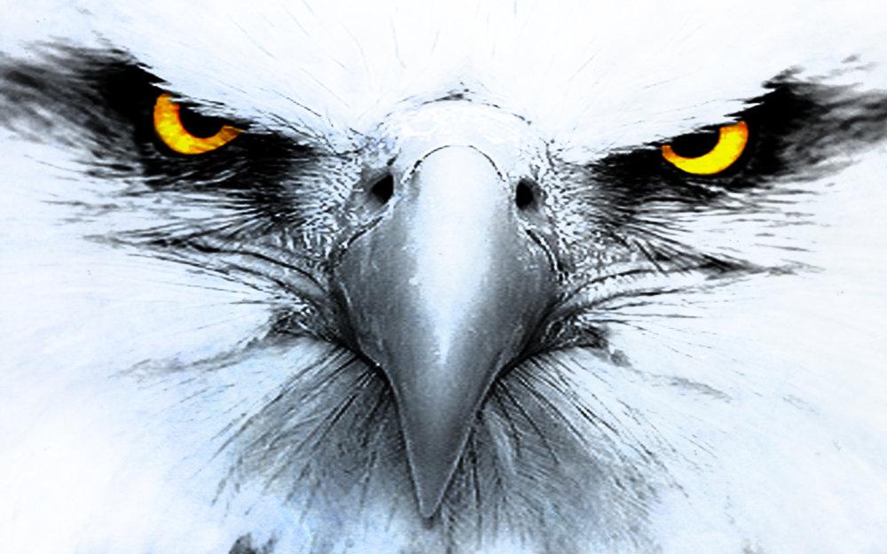 2018 honda talon sxs. simple sxs the honda talon a new bird of prey for performance sxs enthusiast and 2018 honda talon sxs w